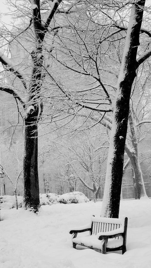عکاسی در هوای برفی