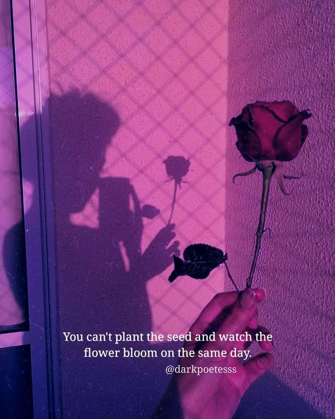 Short Aesthetic Quotes