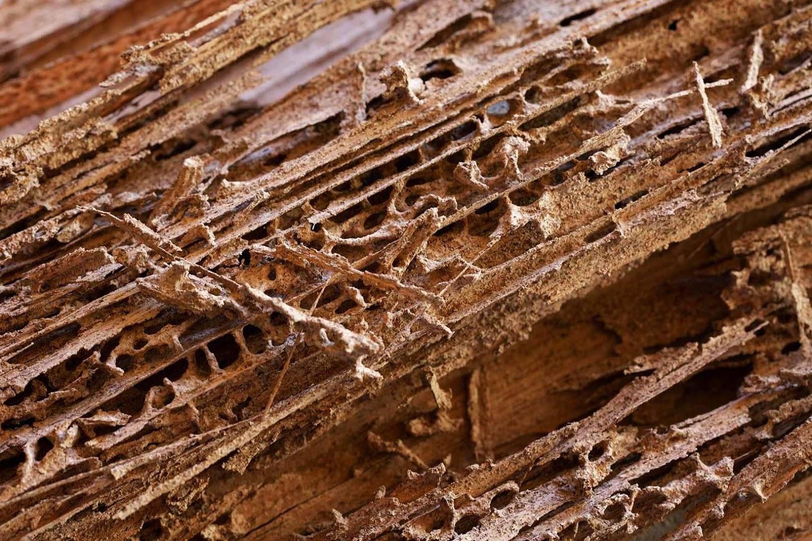 Mối mọt luôn là nỗi lo lắng của những công trình nhà gỗ