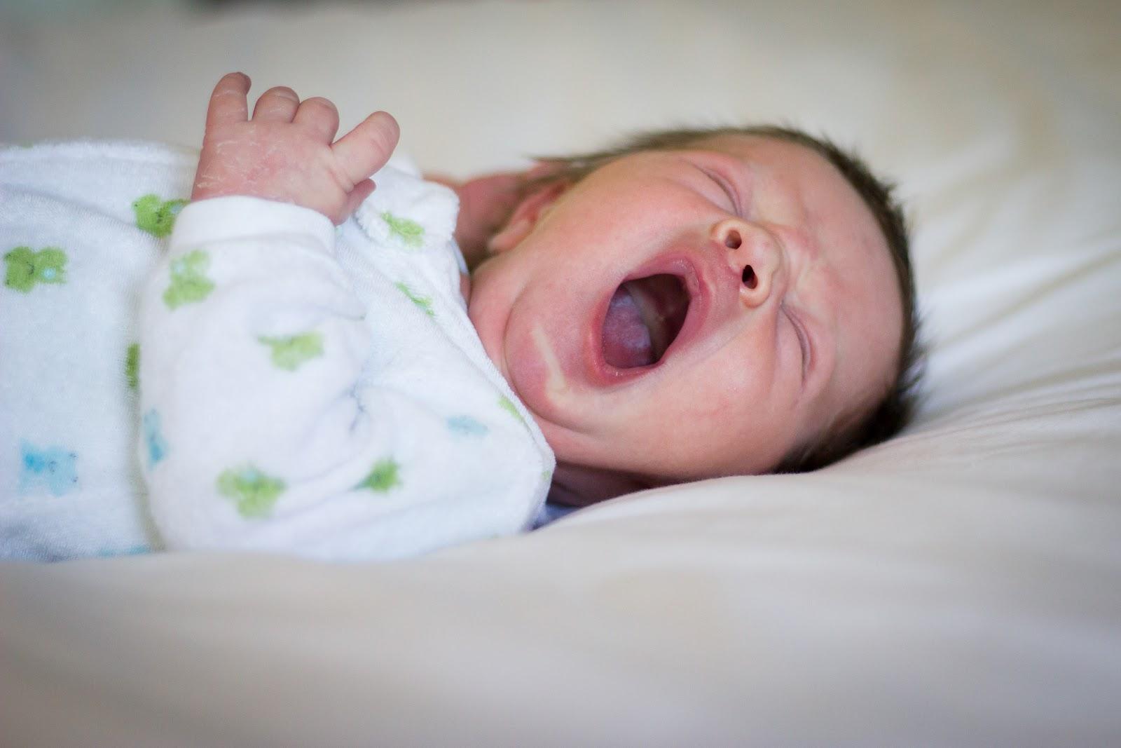 Felix Yawning.jpg