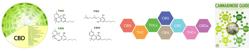 the miracle of cannabinoids