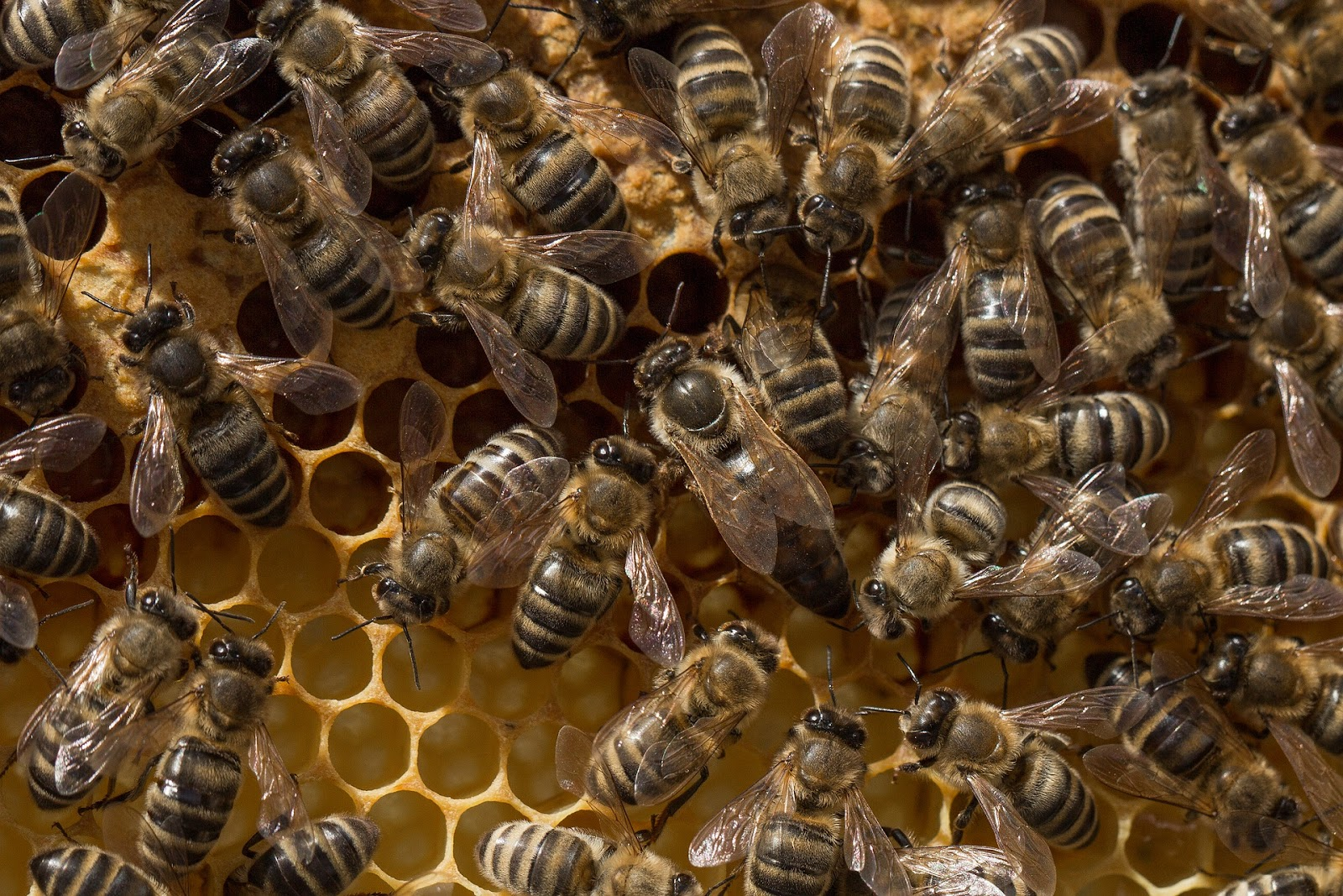 Just Bees, Just Bees