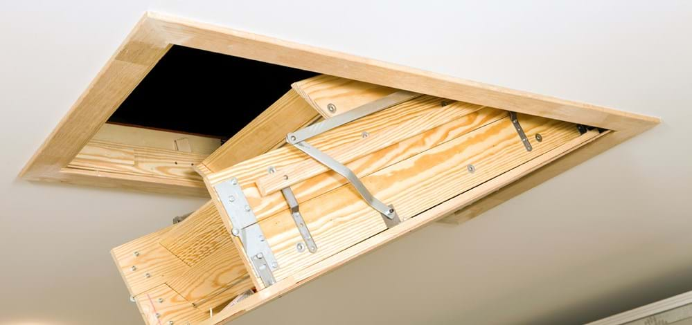 Attic Bugs, Insects, Pest: Prevention Tips for Attic Bugs