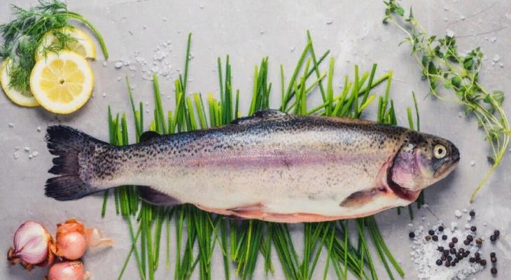 Радужная форель — цена свежей рыбы от производителя