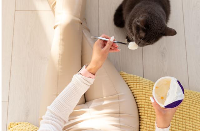 mèo ăn bao nhiêu sữa chua là đủ?