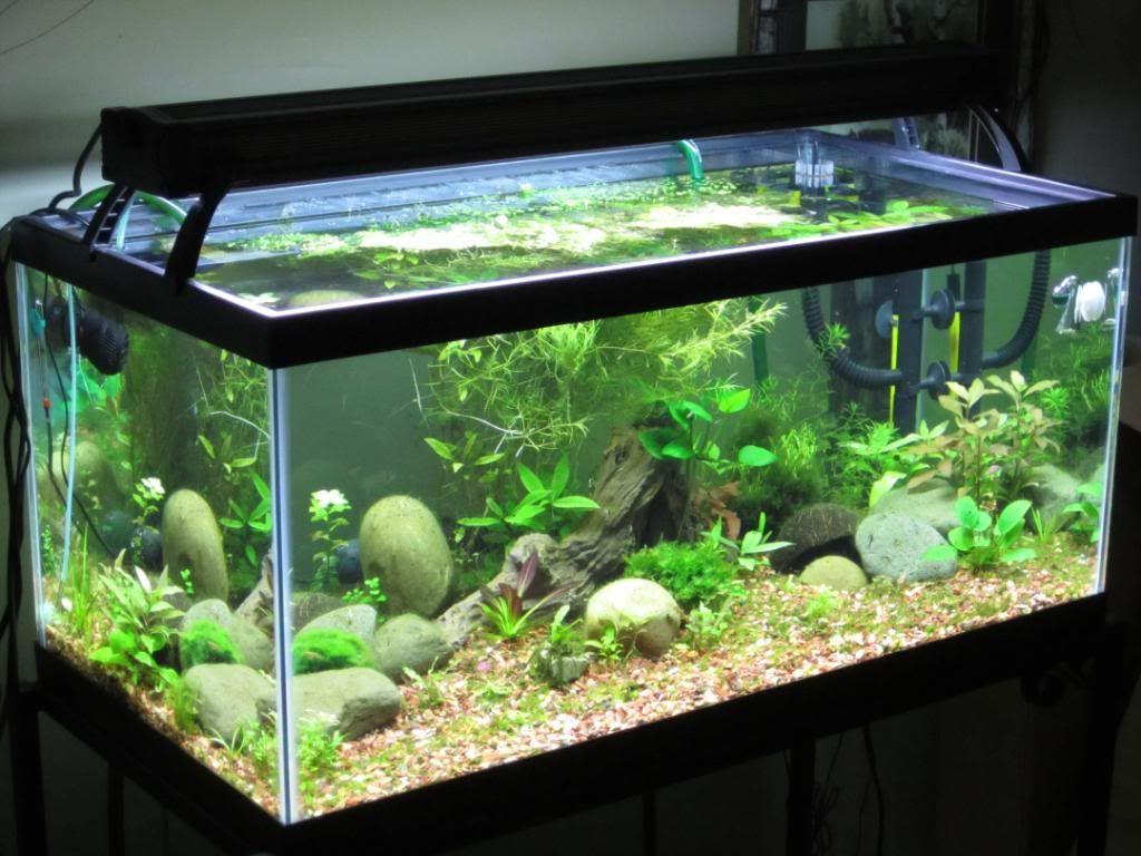 40加仑水族馆