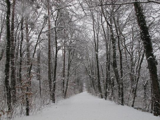 C:\Users\Cécile\AppData\Local\Microsoft\Windows\Temporary Internet Files\Content.IE5\0B17HVA0\winter-forest-1054055_960_720[1].jpg