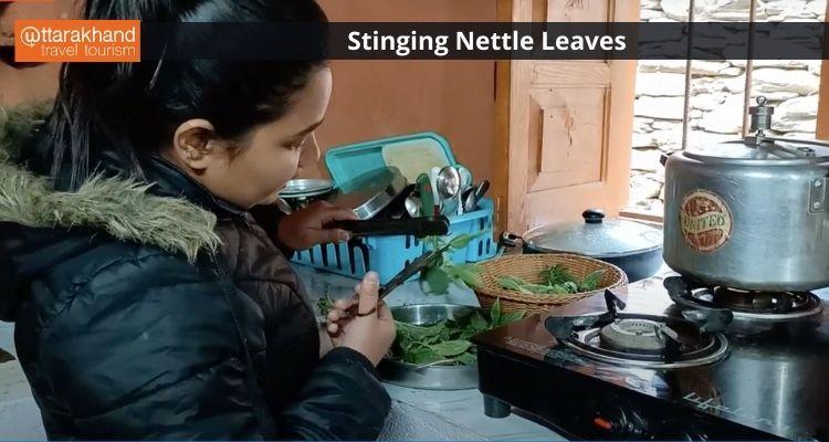 Stinging Nettle.jpeg