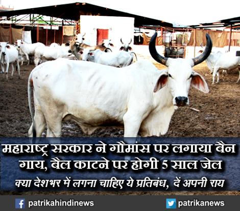 'महाराष्ट्र सरकार ने गौमांस पर लगाया बैन, गाय, बैल काटने पर होगी 5 साल जेल.. (क्या देशभर में लगना चाहिए ये प्रतिबंध, दें अपनी राय)    यहाँ पढ़ें - http://goo.gl/aordRD'