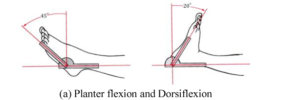 Plantar flexion and Dorsiflexion