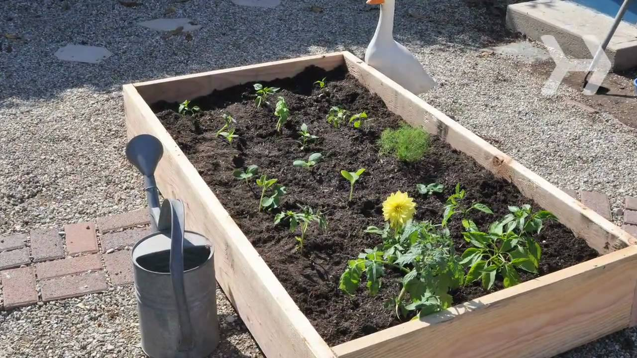 How to Plant a Vegetable Garden