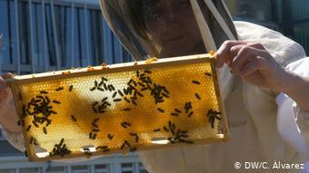 Пчеловод держит рамку с медом, облепленную пчелами