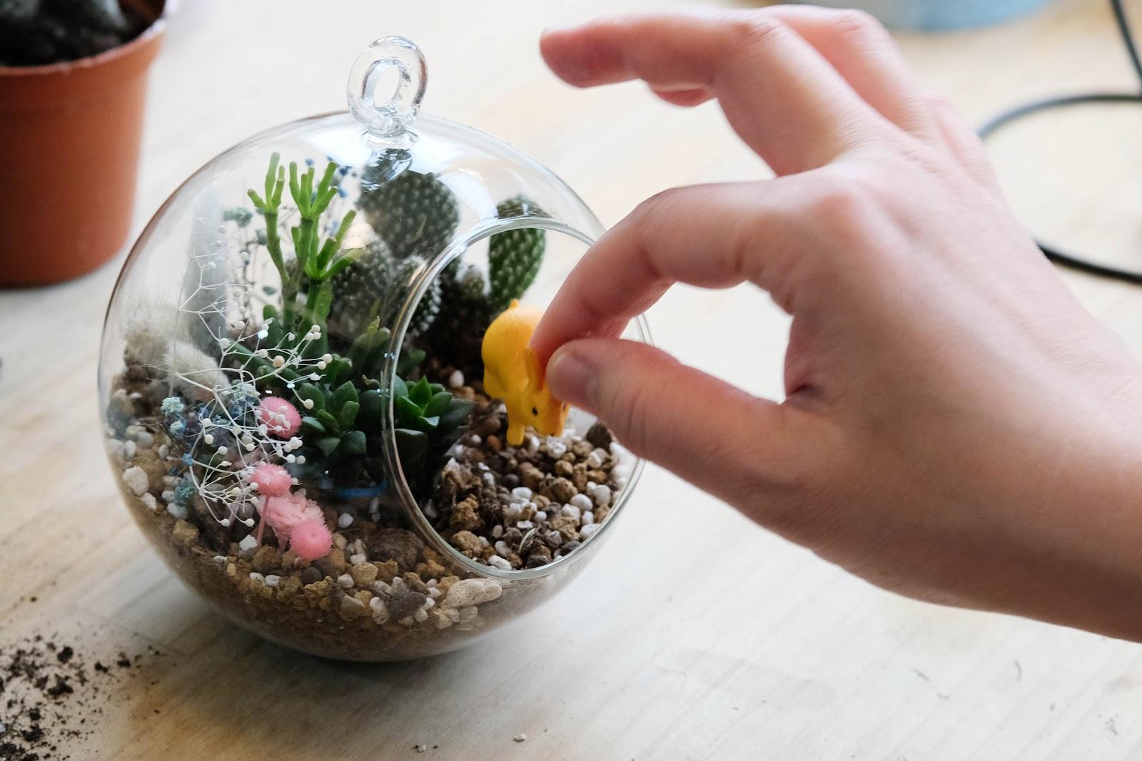 多肉植物照顧-澆水方式