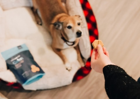 Dog and snack