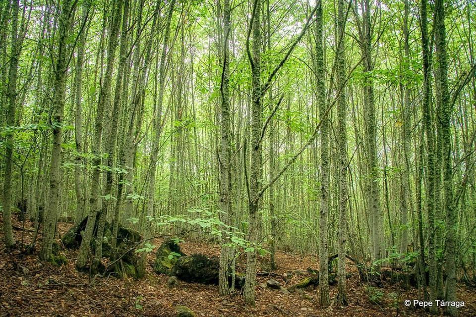 La imagen puede contener: árbol, planta, exterior y naturaleza
