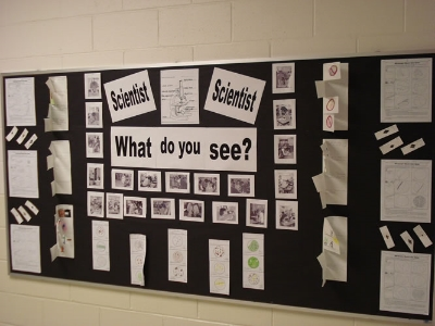 Bulletin board science display