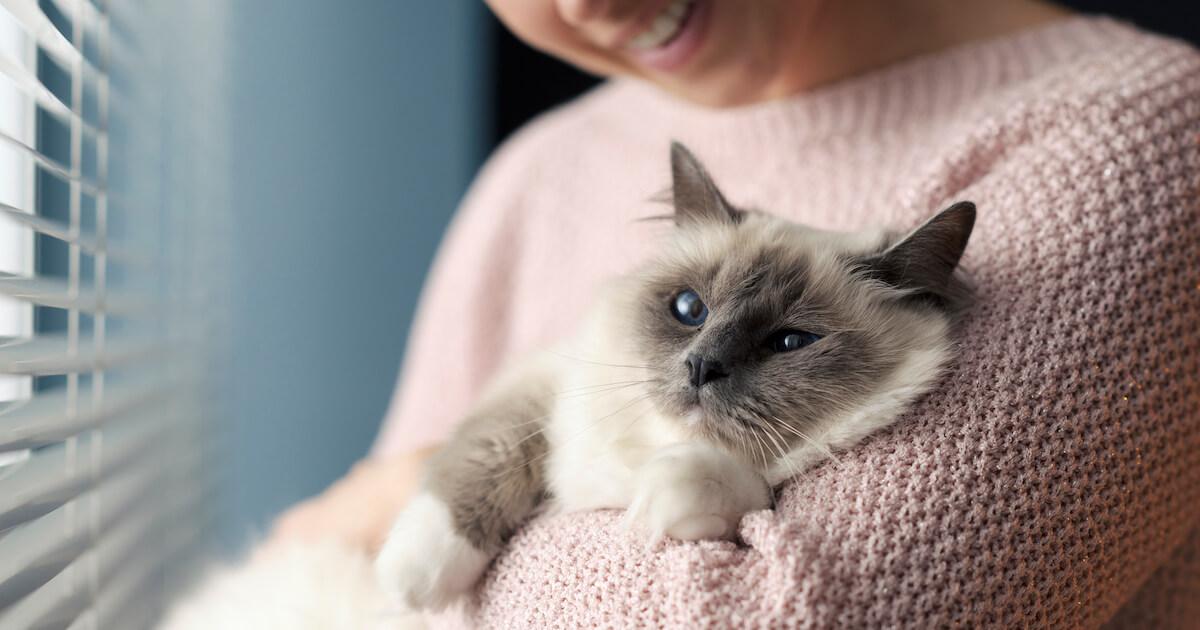 FELIWAY contribue au bien-être du chat dans son environnement