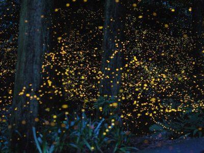 https://tripcarte.asia/wp-content/uploads/2017/10/firefly-park-400x300.jpg