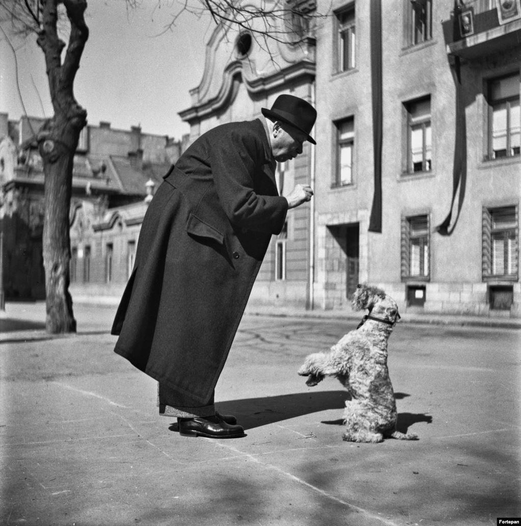 Мужчина дрессирует (или балует) своего пинчера, Будапешт, 1952 год