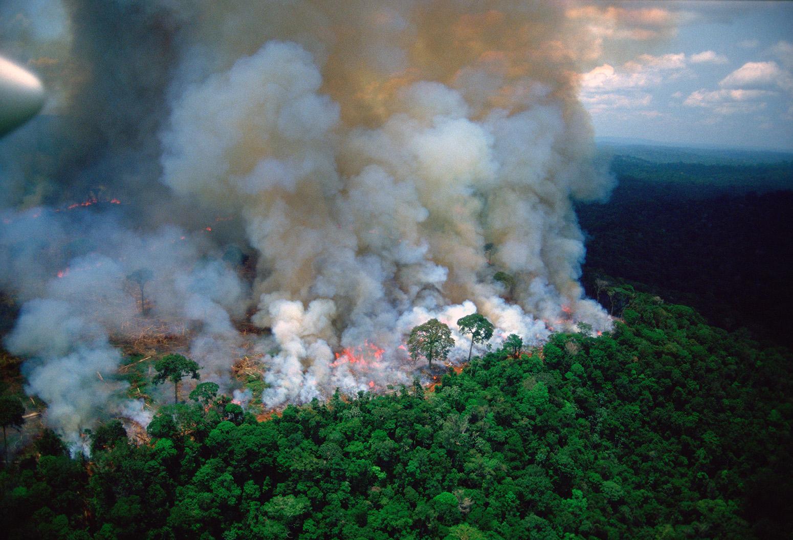 Incendios del amazonas siguen en pie. Estudios afirman que estos seguirán aumentando.