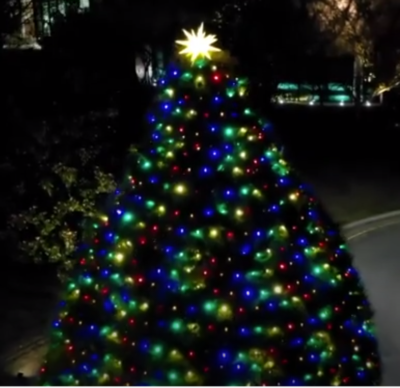 Town of Cary Christmas Tree