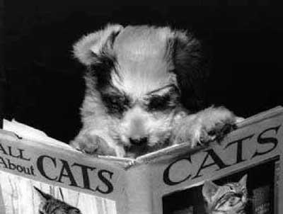 dog-reading-book.jpg