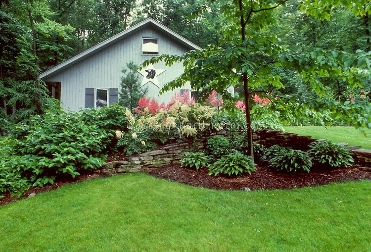 Астильба: фото цветов на клумбе в сочетании с другими растениями