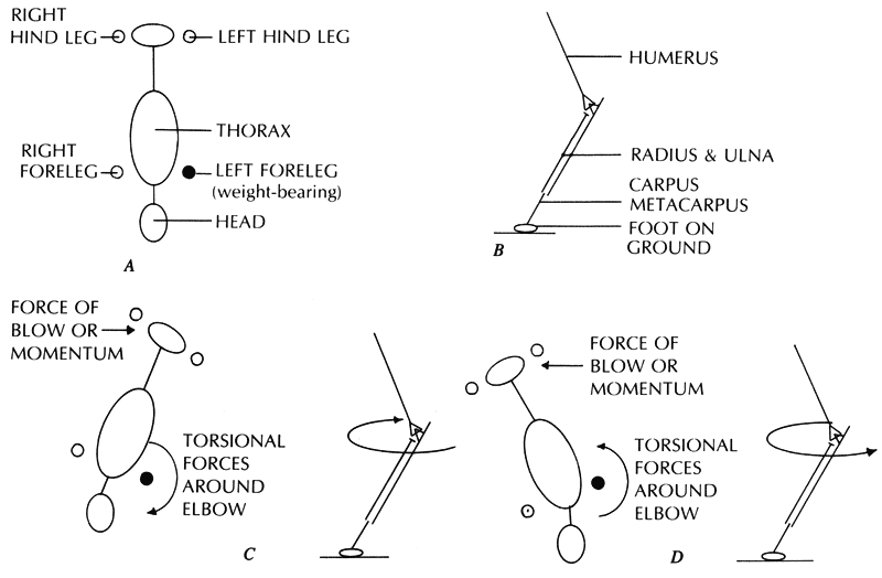 Schematic drawings show the animal from two views
