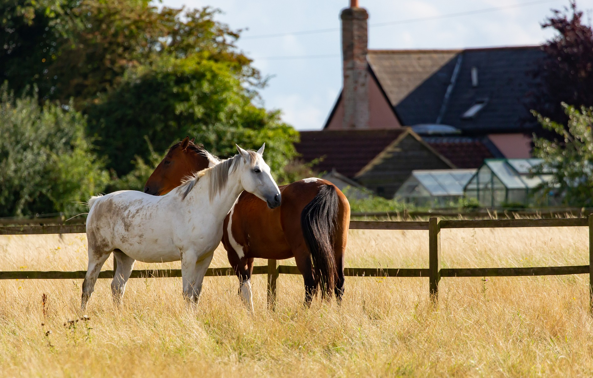 grey horse and paint horse being boarded outdoors to save money