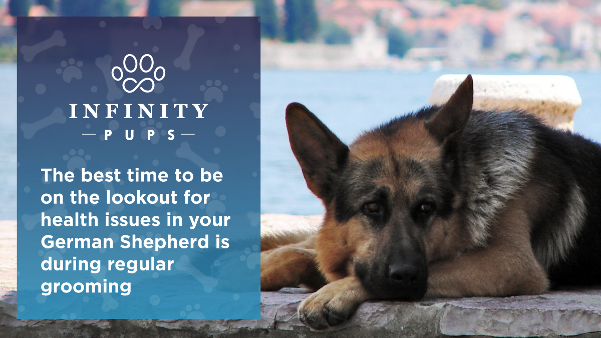 Watch for health issues with your German Shepherd