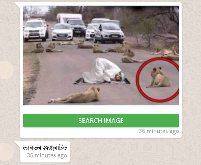 Lion gujarat whatsapp.png