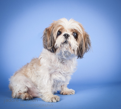 Dog Adoption Ohio