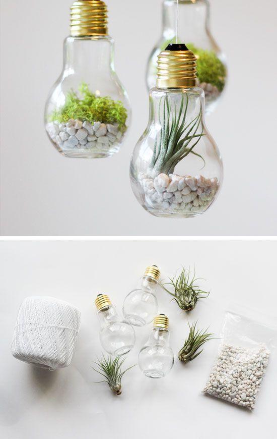 plantas holofotes