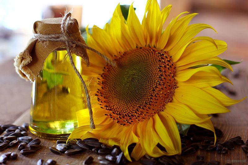 Sunflower Lecithin during Pregnancy