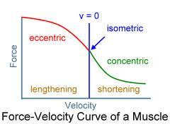 http://cdn2.bigcommerce.com/server3800/mfsnjj1q/product_images/uploaded_images/muscle-force-velocity-curve.jpg