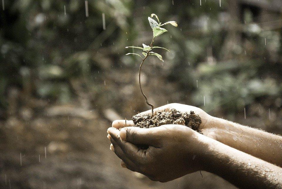 Hands, Plant, Soil, Grow, Growing, Growth, Nature