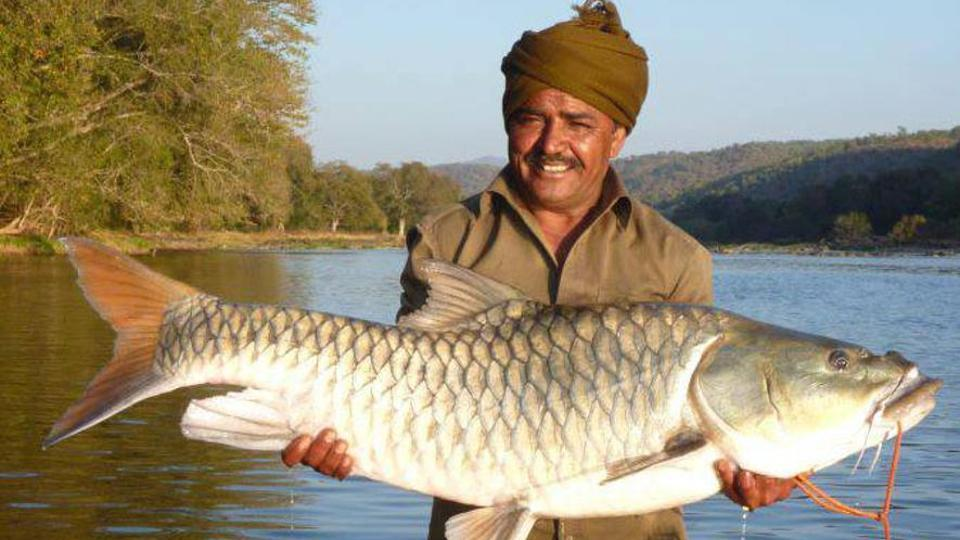 Image result for The hump-backed Mahseer