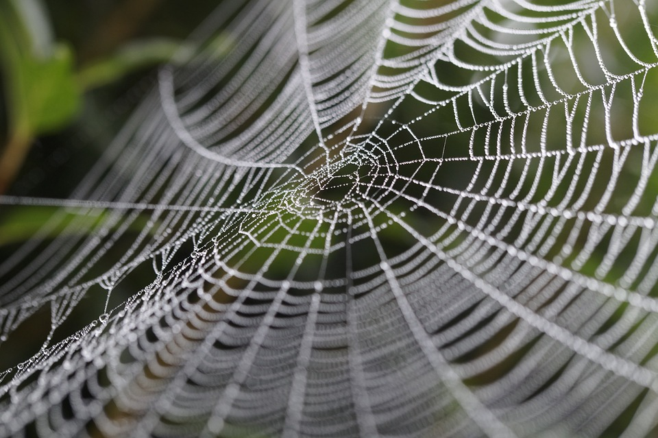 Image result for orbweb