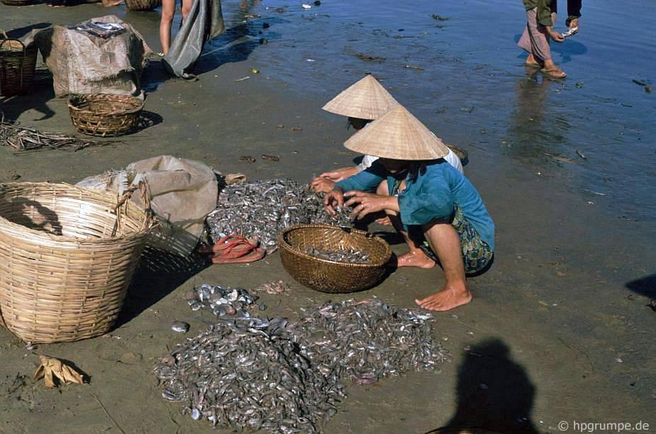 Qui Nhơn - loại cá trên bãi biển