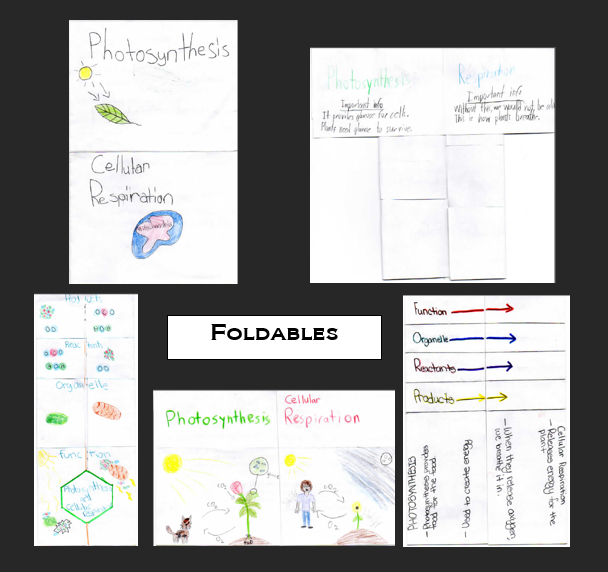 Seventh grade Lesson Photosynthesis and Cell Respiration Foldable – Cells R Us Worksheet Answers