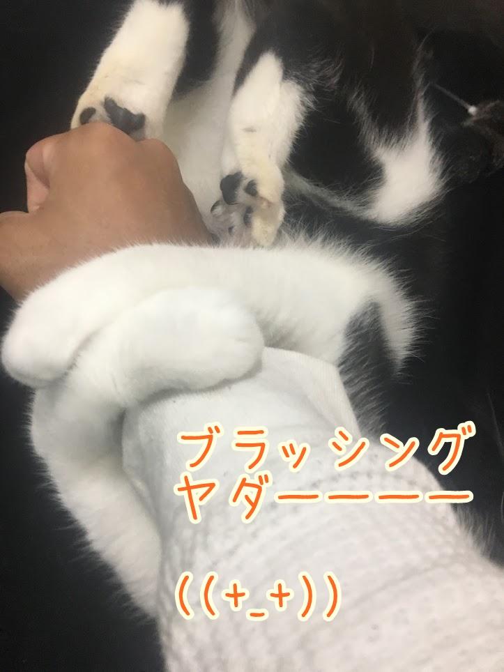 猫にブラッシングは必要なの?その頻度とおすすめのブラシについて