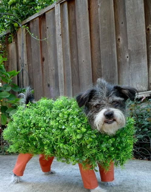 Dog dressed as a Chia Pet