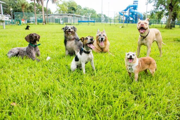 Can You Socialize An Adult Dog -take them to a dog park