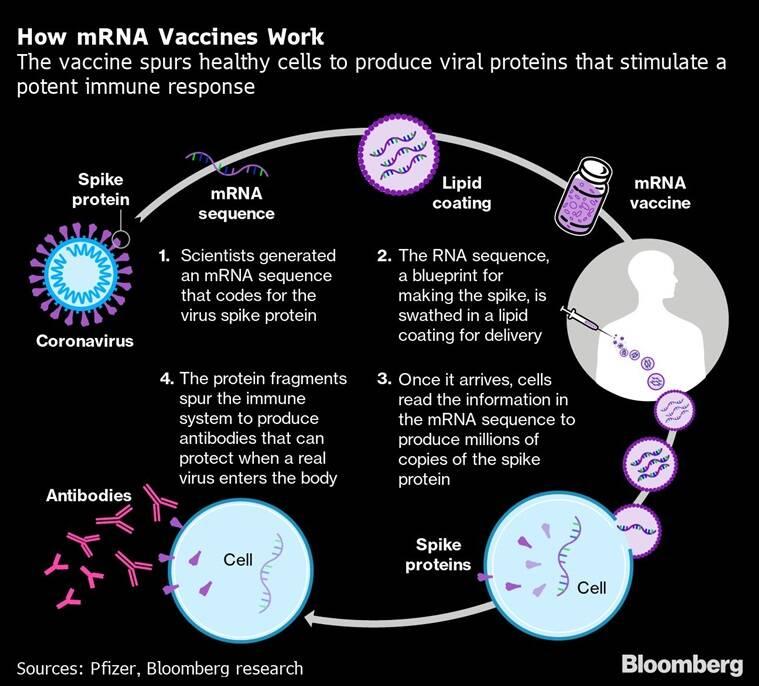 RNA vaccine, mRNA vaccine, What is Moderna vaccine, What is Pfizer vaccine, What is RNA vaccine, RNA vaccine explained