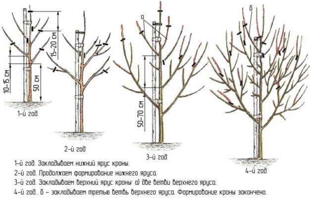 Уход за растением (обрезка, полив, удобрения, укрытие на зиму и т. д.)