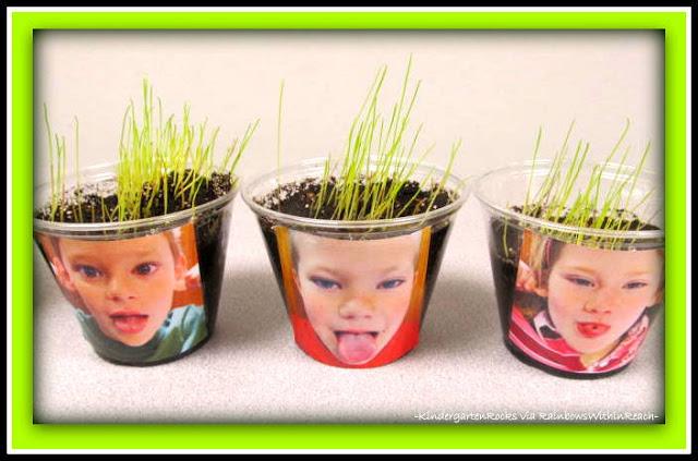grow seed hair.jpg
