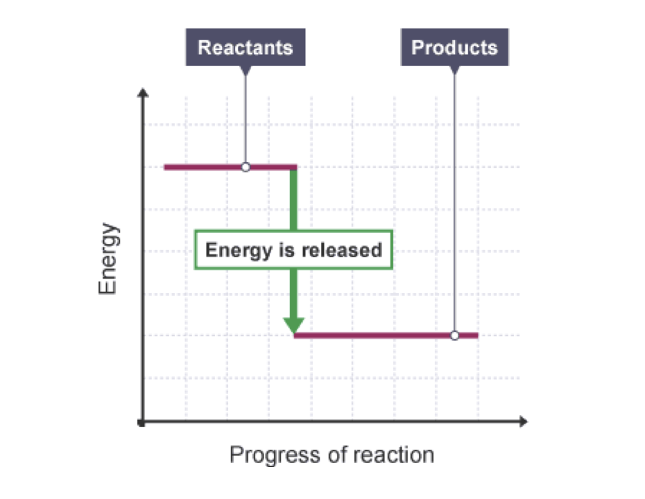 Energy Profile Diagram Exothermic Reaction Custom Wiring Diagram