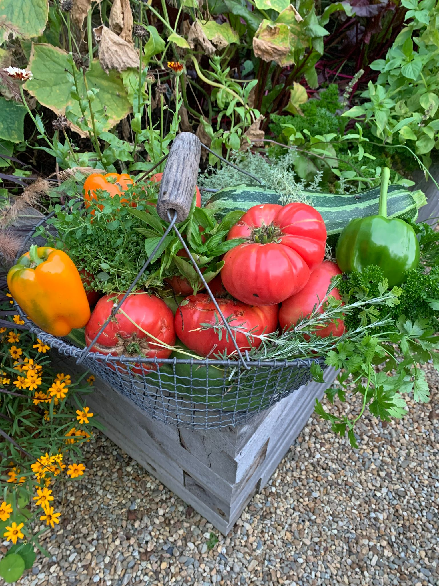 What is a CSA & How Does Community Support Help the Environment?