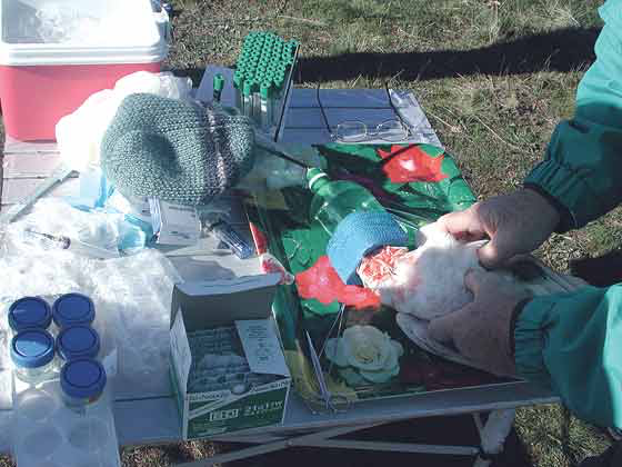 A field anesthetic setup