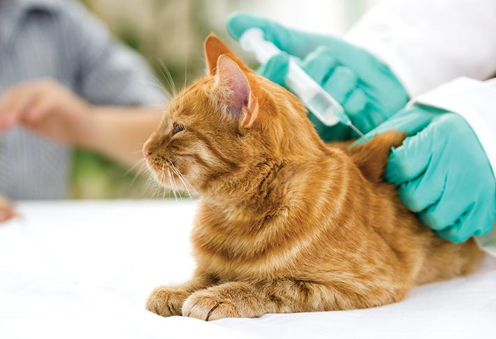 Check your cat's health on a regular basis